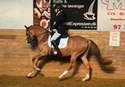 Horse for sale - RØGILD'S KEAN