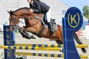 Horse for sale - TAI CORDIS