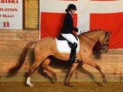Horse for sale - MB QUEEN BEE