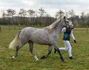 Horse for sale - HILLOCK'S BARDOT