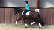 Horse for sale - FRAGOLINI