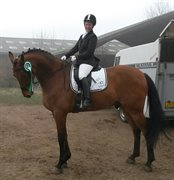 Horse for sale - OVERGAARDS LUCKY LOU