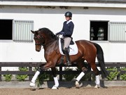 Horse for sale - Jalousi