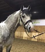 Hest til salg - BAQUITO K