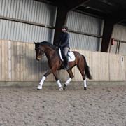Hest til salg - SOLERO AF LANDLYST