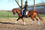 Horse for sale - WOLKEN SPIELL