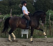 Horse for sale - VILLAGAARDENS LOUIE