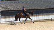 Horse for sale - Jogi-horses
