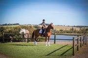 Horse for sale - SAMARELLO