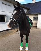 Hest til salg - SOLHJEMS PEGASUS