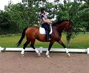 Horse for sale - Grønskovlunds Tequila