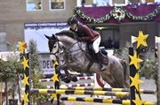 Horse for sale - MAGIC SKYWALKER