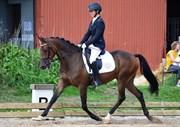 Horse for sale - RØGILD'S KEMAL