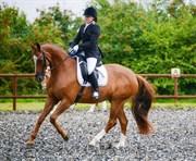 Horse for sale - HØNNERUPS DIOL