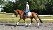 Horse for sale - HAURUMS WALINA
