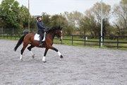 Horse for sale - HESSELGÅRDENS ALINA