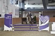 Hest til salg - GHOST