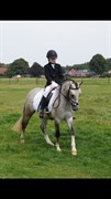 Horse for sale - EAgel