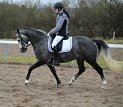 Horse for sale - PARAFIN