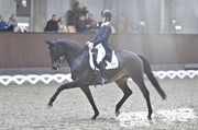 Horse for sale - HERBSTTRAUM