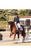 Horse for sale - STEGSTEDGAARDS NOBEL