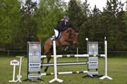 Horse for sale - CARPE DIEM Z