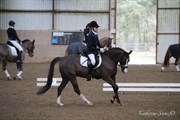 Hest til salg - IA SHIVA