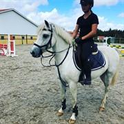 Horse for sale - Miniature Hero