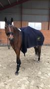 Horse for sale - COCKTAIL EG