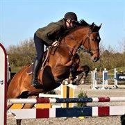 Horse for sale - LUNA