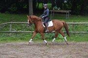 Horse for sale - KÆRETS LULU