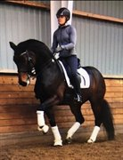 Hest til salg - FRIDA GOLD 5