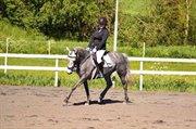 Horse for sale - Lehid Linda