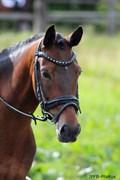 Hest til salg - NYSKOVENS HYACINTH