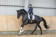 Horse for sale - KALHAVE'S MR. FREESTYLE