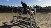 Horse for sale - Nanna