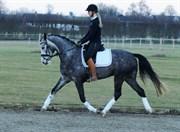 Hest til salg - SØGAARDS MOON DANCER