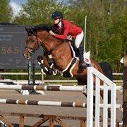 Horse for sale - EXPAT'S MUZZLE FLASH