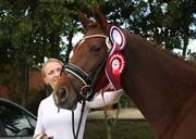 Horse for sale - JUDY OVERSKOVLUND