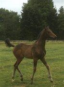 """Horse for sale - Estelle """"C"""""""