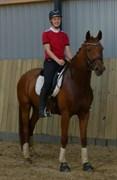 Horse for sale - ZELINA Z