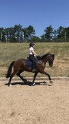 Horse for sale - Ziva