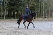 Horse for sale - AFRIEL DONAS DREAM