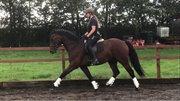 Horse for sale - MAGO-ALSIDIG