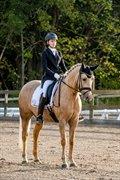 Horse for sale - Romeo´s Luxus