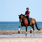 Horse for sale - AVILEA