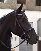 Hest til salg - KELOWNA