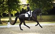 Horse for sale - SOLERO-DN