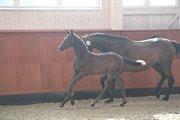 Horse for sale - DAY-LIGHTS JARNAC