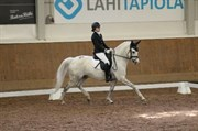 Horse for sale - Northface